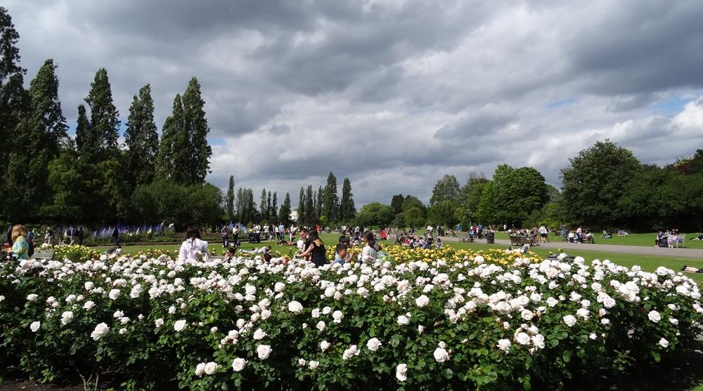 Queen Mary's Garden Regent's Park